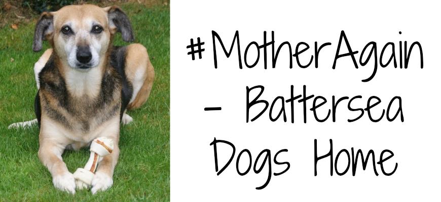#MotherAgain - Battersea Dogs Home header