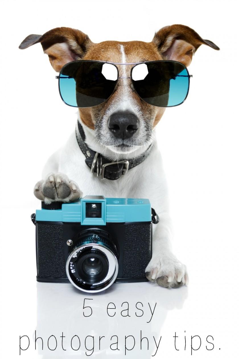snap shot of a dog essay