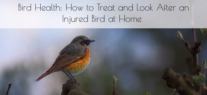 Bird Health: How to Treat and Look After an Injured Bird at Home